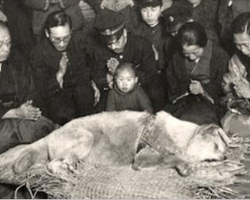 Old Dog Dies In 1935, Then Thousands Show Up To Mourn His Death