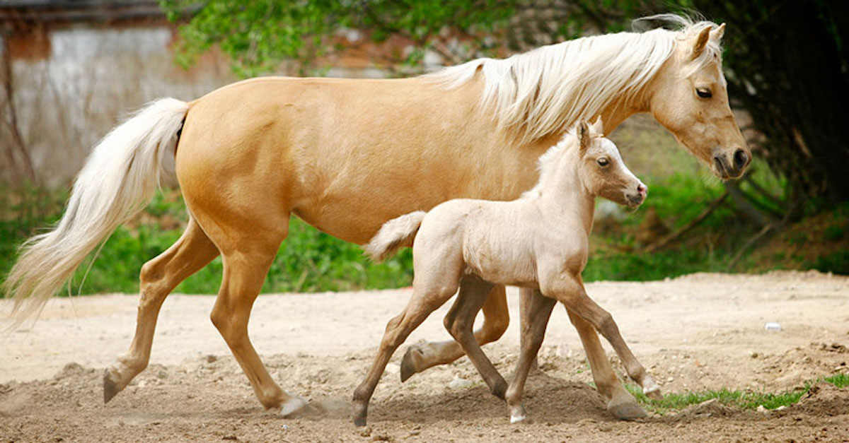 Pregnant Horse Gives Birth To Newborn Foal. What Her ...
