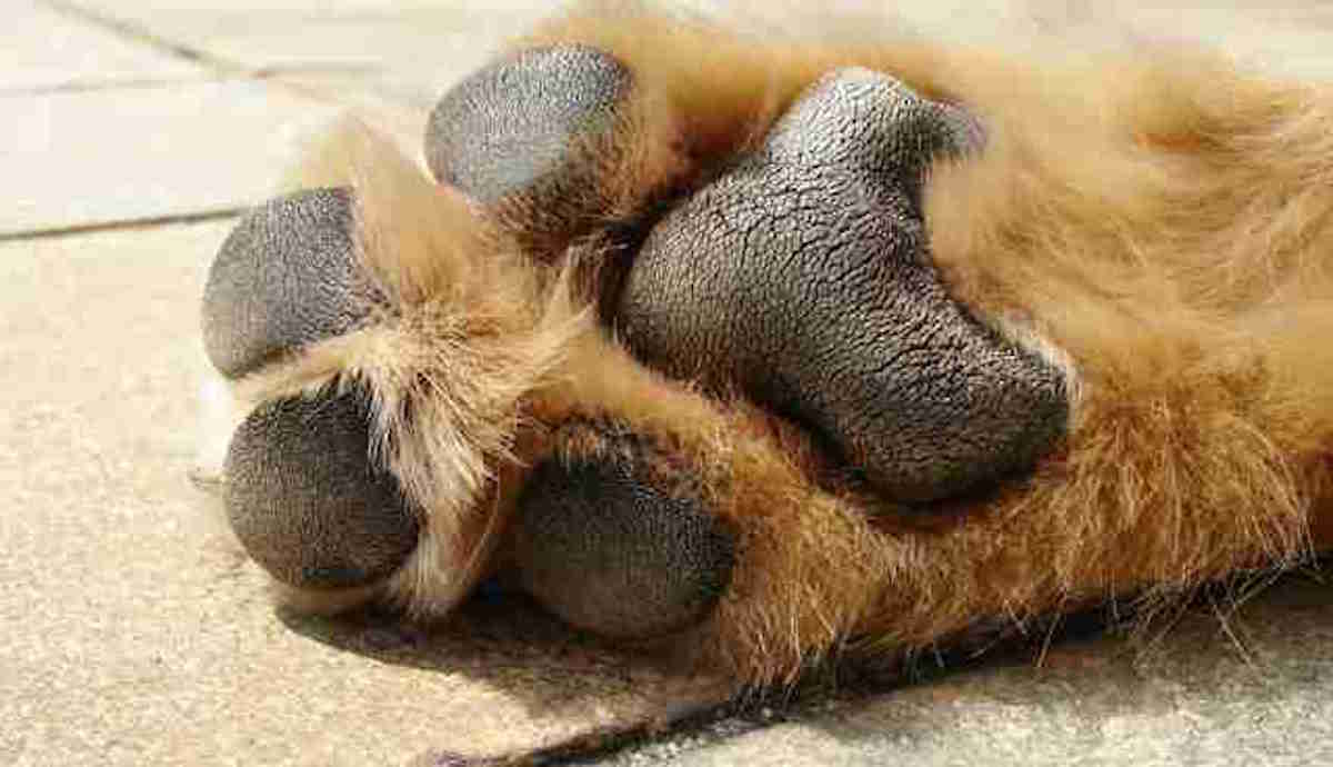 Photo Of Hot Asphalt And Dogs Paws