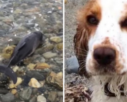 Dog Rushes To The Rescue After She Spots A Stranded Creature On The Beach
