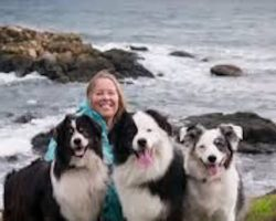 Dying woman just has one final wish for her dogs before she goes