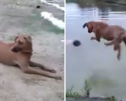 A Man Was Drowning — Until This Rescue Dog Did The Unthinkable!