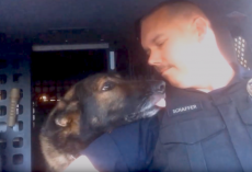 Officer Radios In K-9's Retirement Call, And The Dog Knows It