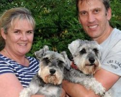 Lost Dogs Come Running After Their Family Cook Sausages Near The Spot They Went Missing
