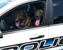 Lost Dogs Take Over Cop's Patrol Car After He Rescues Them From Traffic
