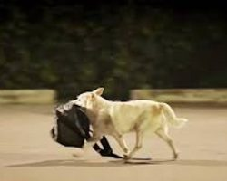 Man Feeds Stray Dog And Is Repaid In The Sweetest Way