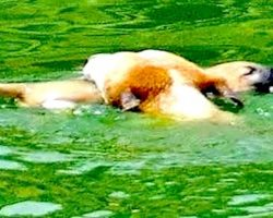 Mother Dog Rescues Drowning Puppy Minutes After Giving Birth! Incredible!