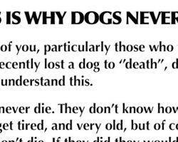 We were wrong all along — dogs never really die