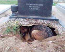 People thought dog was grieving over a deceased owner. Here's the truth