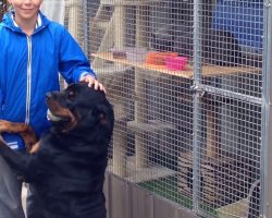 Rottweiler Misses Boy, Shows His Love When He Sees Him After Few Weeks