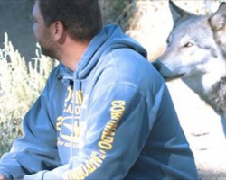 Veterans Coping With PTSD Are Healing With The Help Of Rescued Wolves