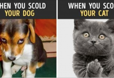 13 Photos Proving That Cats and Dogs Are from Different Worlds