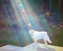 Mom snaps picture of deceased son's dog, gets chills when she spots the ray of light in the photo