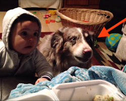 "She's Trying To Get The Baby To Say ""Mama,"" But Just Keep Your Eyes On The Dog"
