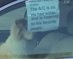 10+ Funny Dog Tweets That Are Too Relatable