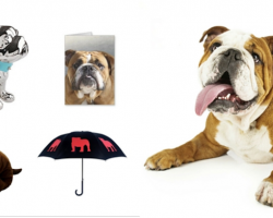 20 Things That All Bulldog Lovers NEED To Have
