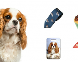 20 Must Have Items For Cavalier King Charles Spaniel Lovers