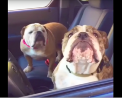 They approach some Bulldogs in a car, then the two really let their personalities shine