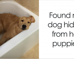 30 Of The Happiest Dog Memes Ever That Will Make You Smile From Ear To Ear