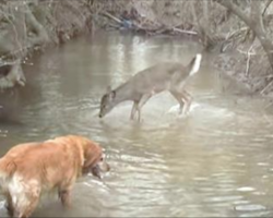 As his dog approaches, how the deer reacts made the owner run for his camera