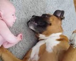 Sweet Boxer Dog Gets Icky Surprise From Adorable Baby