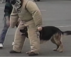 When the dog gets bored of police training, the laughs start rolling