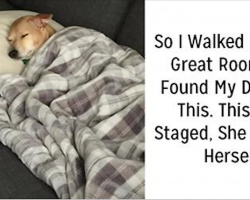 25 hilarious times dogs were caught acting extremely weird
