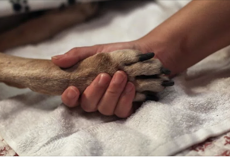 Before euthanizing your dog or cat, vets want owners to know the truth