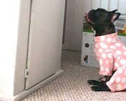French Bulldog Becomes Obsessed With Watching The Fish Tank Her Parents Brought Home