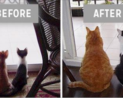 14 precious before and after photos of animals that grew up together