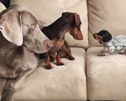 Two Dogs Introduced To Their Newest, Adorable Family Member