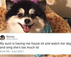 Woman Afraid To Leave Her Dog Alone With Dog Sitter Writes Him List Of Rules, And They Go Viral
