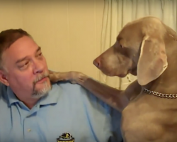 Dog Doesn't Like It When Dad Ignores Him, And He Makes It Clear That He WANTS Attention
