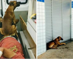 Loyal dog rides in ambulance and waits 32 hours at the hospital after his owner get ill