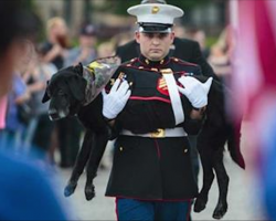 Marine dog serves 3 tours in Iraq. His goodbye after battle with cancer has thousands sobbing