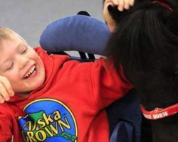 Every Day, This Mini Horse Goes To School With A Disabled Boy. This Is SO Incredible, I've Never Seen Anything Like it!