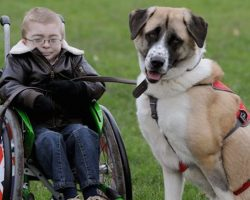 Disabled Boy Lived In Fear Til He Met This Amputee Rescue Dog. So Heartwarming!