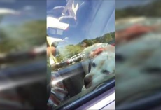 Police Officers Rescue Two Dogs From Overheated Cars