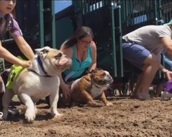 Man Wants More Family-Friendly Crowd To Come To Racetrack, Then He Has The Idea To Race Bulldogs