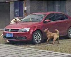 Man Kicks A Homeless Dog So The Homeless Dog Gets Even…