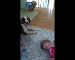 This Is Why We Have Dogs For Our Kids. Absolutely Hysterical!!!