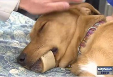 Vets Warn Dog Owners Of The Dangers Of Marrow Bones