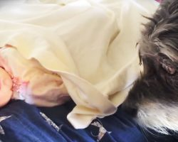 Watch This Baby's Blanket – This Little Dog Is About To Do Something Amazing!