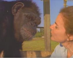 18 Years After Saving Chimp Their Eyes Meet Again — Ignoring All Warnings, She Walks Too Close