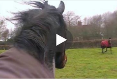 Over 4 years later, this horse is reunited with an old friend