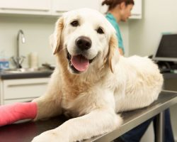 Pet Insurance: What You Need to Know