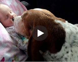 They Have To Say Goodbye To Their Baby Girl.. But What The Dogs Did Will Touch Your Heart Even More..