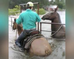 Horse Trapped In Pen Panics As Flood Waters Rise, Then Hero Cowboy Rides Up