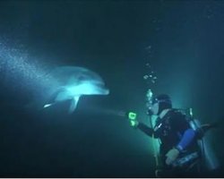 Injured Dolphin Approached Divers For Help. Nothing Could Prepare Them For What They Saw
