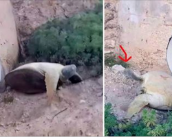 Man Spots 'Lifeless' Turtle Under Bridge. Takes Closer Look And Realizes He Needs To Run